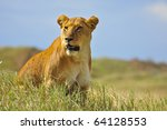 Watchful Lioness. Serengeti...