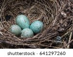 A Blue Jay\'s Nest With Blue...