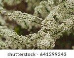 cherry blossoms flowers  korea | Shutterstock . vector #641299243