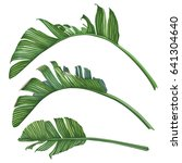 set of tropical leaves. vector... | Shutterstock .eps vector #641304640