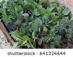 Vegetable Seedling Ready For...