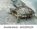 turtle on the concrete floor...   Shutterstock . vector #641334124