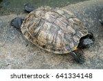 turtle on the concrete floor    Shutterstock . vector #641334148
