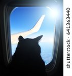 Aviation Cat Flying In An...