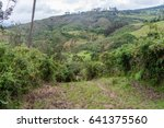 Countryside In Cloud Forest...