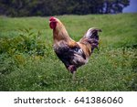 Small photo of Rooster similitude yellow on a background of green grass and meadow flowers