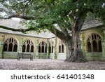 oxford  uk   may 2017  the tree ... | Shutterstock . vector #641401348