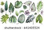 set plants elements   herbs ... | Shutterstock . vector #641405524