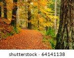 Autumn Woodland Scene In The...