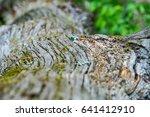 trunk details   Shutterstock . vector #641412910