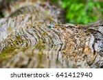 trunk details   Shutterstock . vector #641412940