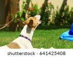 pet | Shutterstock . vector #641425408