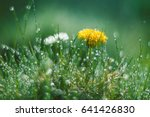 Dandelion Flowers Very...