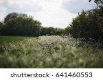 open expanse of a flower field... | Shutterstock . vector #641460553