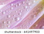 dew drops on daisy petals. ... | Shutterstock . vector #641497903