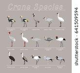 Bird Crane Species Set Cartoon...