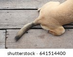 dog tail on wood floor | Shutterstock . vector #641514400