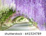 wisteria tunnel at kawachi fuji ... | Shutterstock . vector #641524789