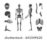 Silhouette Black Human Skeleto...