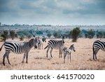zebras under clouds. | Shutterstock . vector #641570020