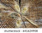 Small photo of Nature pattern background. The structure of the wood. Cross section of tree trunk year rings are caused by the adherence. One of the biological methods of scientific research facility.