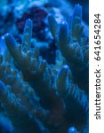 Small photo of Close up macro shot of acropora sps coral tentacles