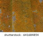 Bright Orange Lichen Growing O...