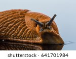 slug on a white background | Shutterstock . vector #641701984