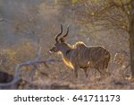 Greater Kudu In Kruger Nationa...