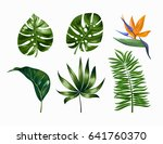 vector tropical trendy summer... | Shutterstock .eps vector #641760370
