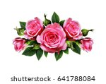 pink rose flowers arrangement... | Shutterstock . vector #641788084