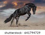 Black Stallion Run In Desert...