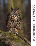 eurasian eagle owl  bubo bubo ... | Shutterstock . vector #641796970