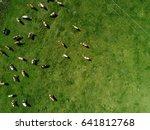 aerial view of cows herd... | Shutterstock . vector #641812768
