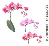 set phalaenopsis orchid  pink ... | Shutterstock .eps vector #641821498