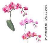 set phalaenopsis orchid  pink ... | Shutterstock .eps vector #641821498