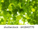 spring is in the air | Shutterstock . vector #641843770