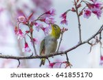 chestnut flanked white eye... | Shutterstock . vector #641855170