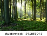 morning in the forest | Shutterstock . vector #641859046