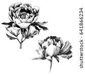 wildflower peony flower. hand... | Shutterstock .eps vector #641866234