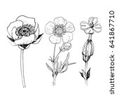 poppy flower drawing vector... | Shutterstock .eps vector #641867710