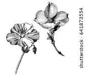 geranium rozanne flowers. wild... | Shutterstock .eps vector #641873554