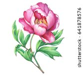the branch flowering pink peony ... | Shutterstock . vector #641878576