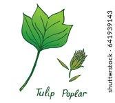 tulip poplar  liriodendron... | Shutterstock .eps vector #641939143