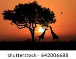 south african giraffes at... | Shutterstock . vector #642006688