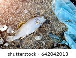 body of death fish on the beach ... | Shutterstock . vector #642042013