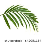 green leaves of palm tree... | Shutterstock . vector #642051154