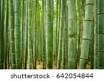 Bamboo Forest In Japan Closeup
