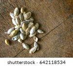pumpkin seeds  | Shutterstock . vector #642118534