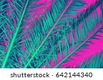 palm leaves on a pink background | Shutterstock . vector #642144340
